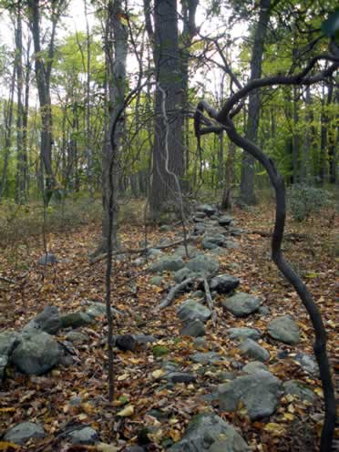 stone wall in the woods