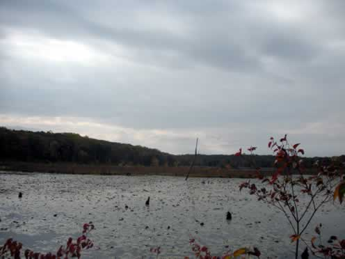 view of timberbrook pond looking south