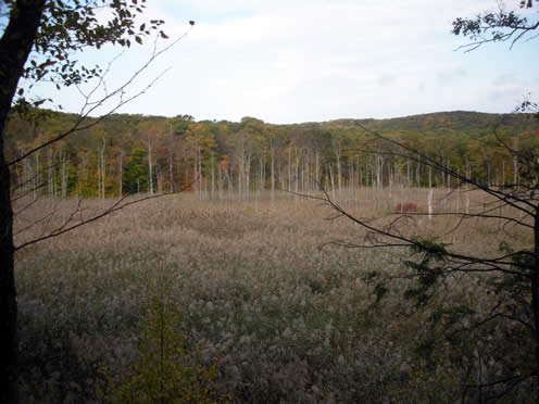 southern edge of timberbrook pond