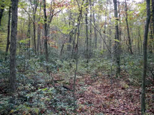 understory in the woods