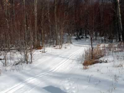 View of a tupper lake downhill through trees