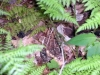 frog in underbrush