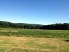 garden state cornfield