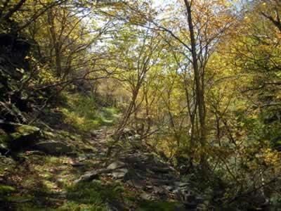 upper notch woods