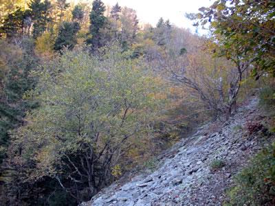 upper notch trail