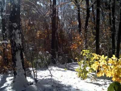 blowdown covering trail