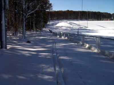 ski tracks alongside trees