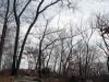 ridge treeline