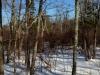 cedar swamp second view