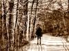 leonard-cedar-swamp