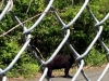 bear in picatinny arsenal