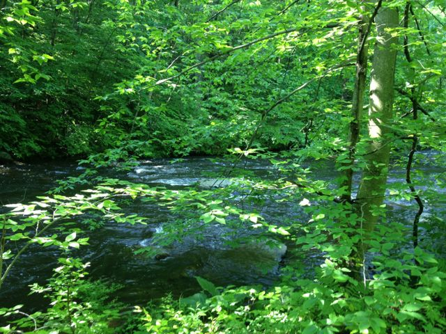 black-river