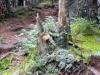 moss and lichen on dead tree stump