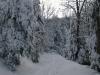 view of powderline trail