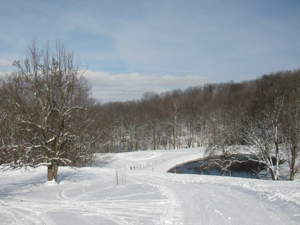 white grass third view groomed tracks